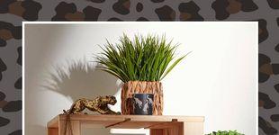 Post de En clave verde: la decoración natural de Primark Home que necesitas para tu hogar