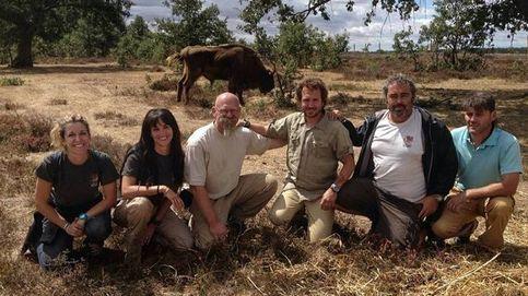 El proyecto burgalés que ha reintroducido bisontes y otras especies prehistóricas en Atapuerca