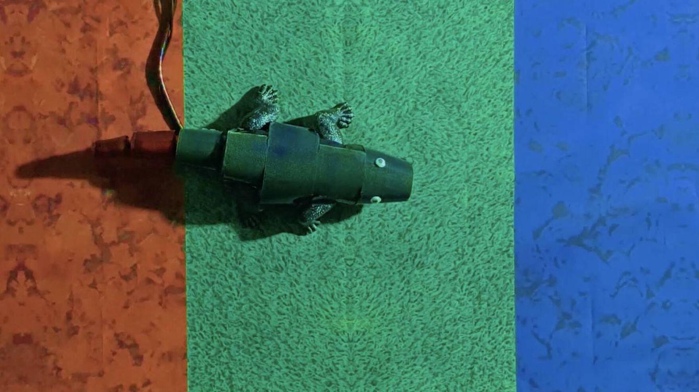 La tecnología que puede hacer que tanques y aviones se camuflen como camaleones