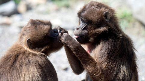 'Cariñitos' en el zoo