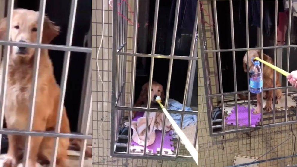 Alimenta por la ventana a un perro que se quedó solo por culpa del coronavirus