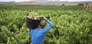 Post de Los bodegueros de Rioja Alavesa temen su peor resaca: el AVE puede atravesar esta zona
