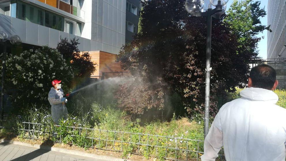 La Comunidad fumiga los juzgados de plaza Castilla por una plaga de mosquitos