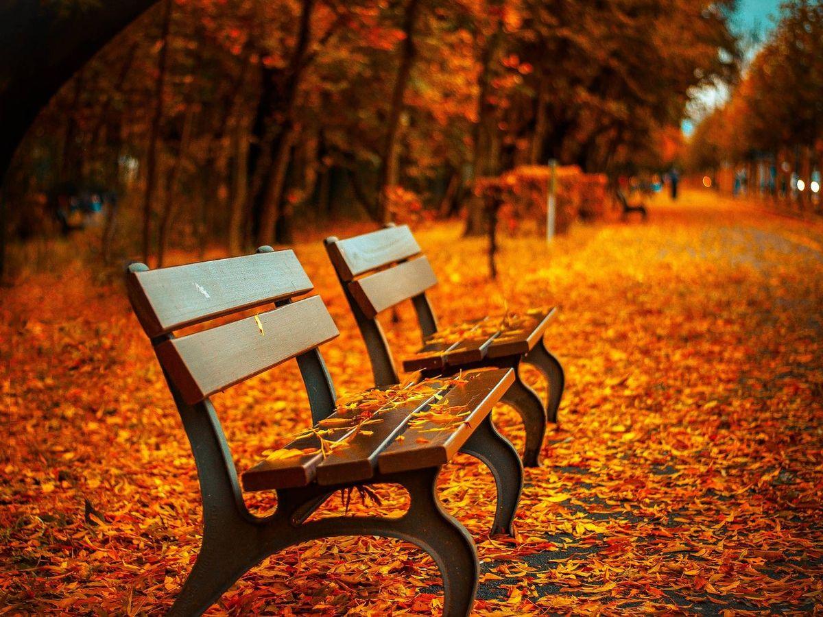Foto: Las hojas de los árboles caen sobre un banco en otoño. (Pixabay)