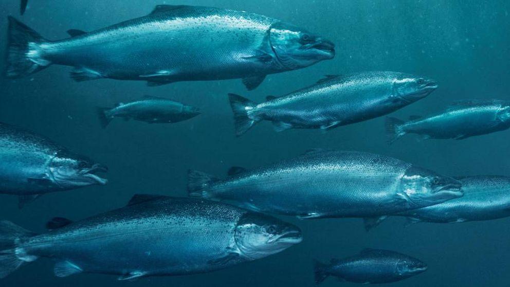 La crisis, las prisas y los jóvenes lastran el consumo de pescado en España