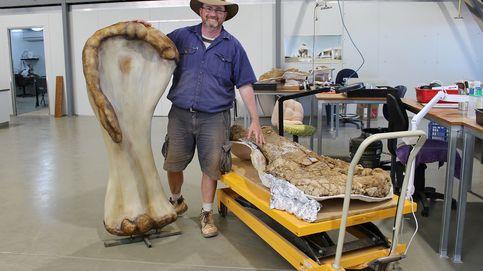 Determinan que el Australotitan es el dinosaurio más grande del continente