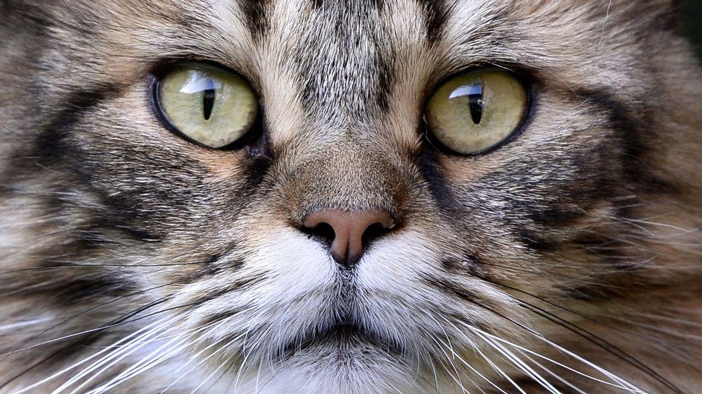 Foto: Vivir con gatos tiene efectos saludables para las personas