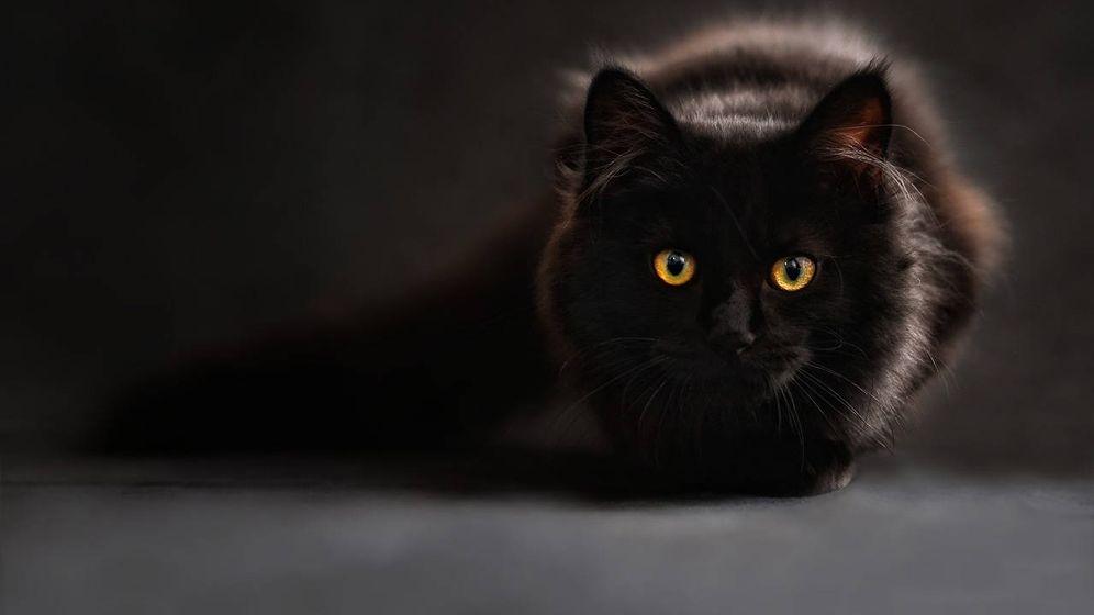 Foto: El gato de Sylvia y Gavin, llamado Phangan, necesita un costoso tratamiento veterinario (Foto: Pixabay)