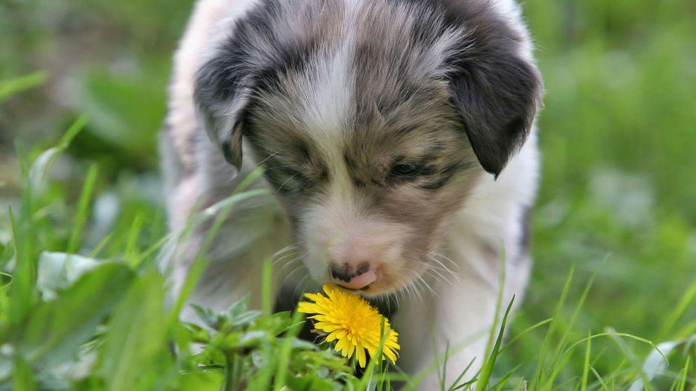 Cuando el olfato de los perros salva vidas (y atrapa ciberdelincuentes)