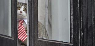 Post de El mundo se pregunta qué ha pasado (o pasará) con el gato de Julian Assange
