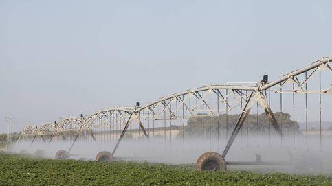El sector agrícola debe liderar el ahorro de agua frente a la sequía
