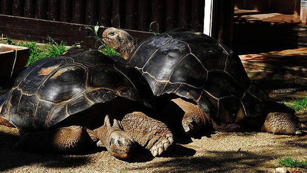 Dos tortugas protagonizan la mayor historia de amor de todos los tiempos