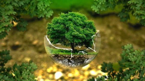 Transición verde: descarbonización y economía circular en la recuperación