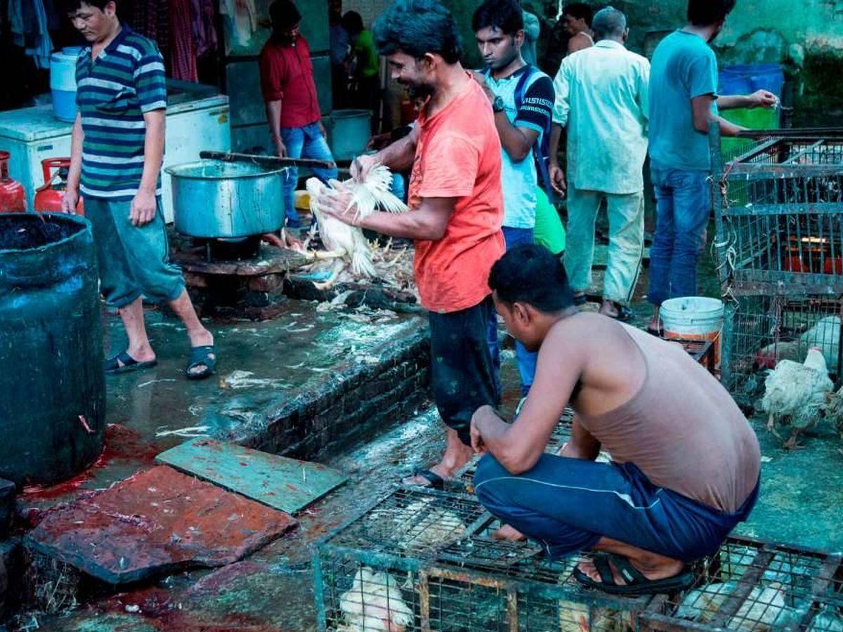 Foto: Mercados húmedos. (Igualdad Animal)