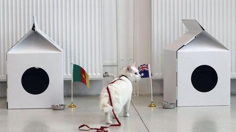 Achill 'predice' el resultado del Camerún-Australia
