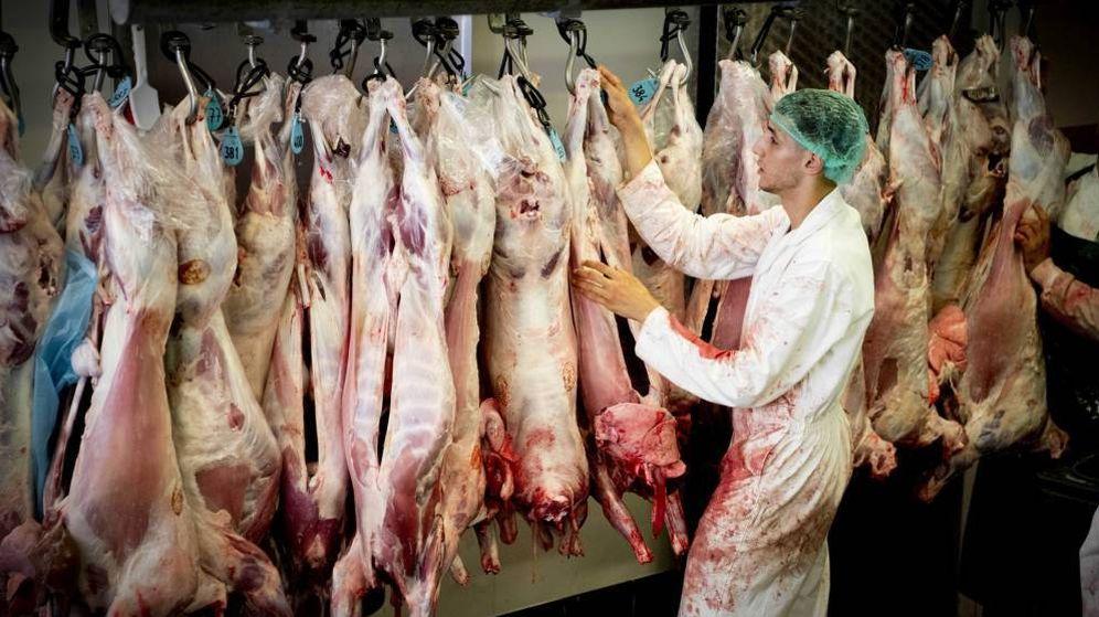 Foto: Muchos de los trabajadores de mataderos son falsos autónomos. (EFE)