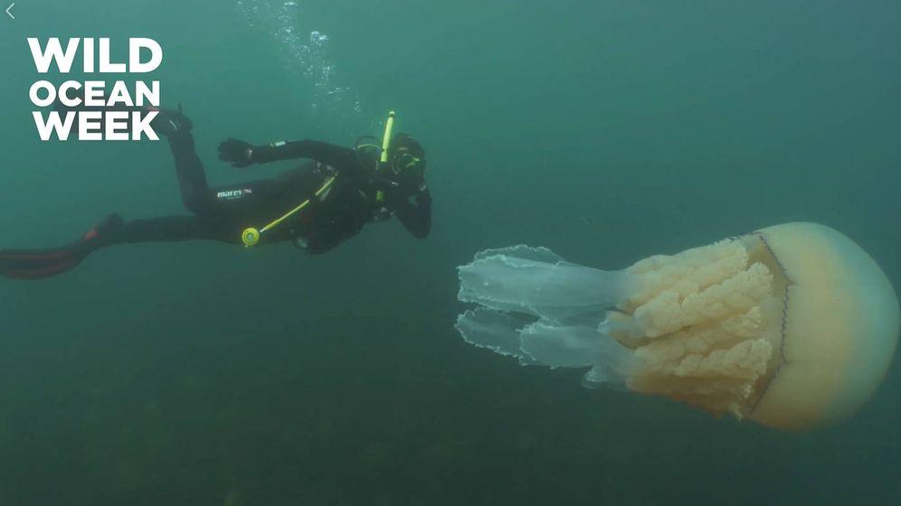 Foto: La medusa era del tamaño de la bióloga Lizzie Daly (Foto: Facebook)