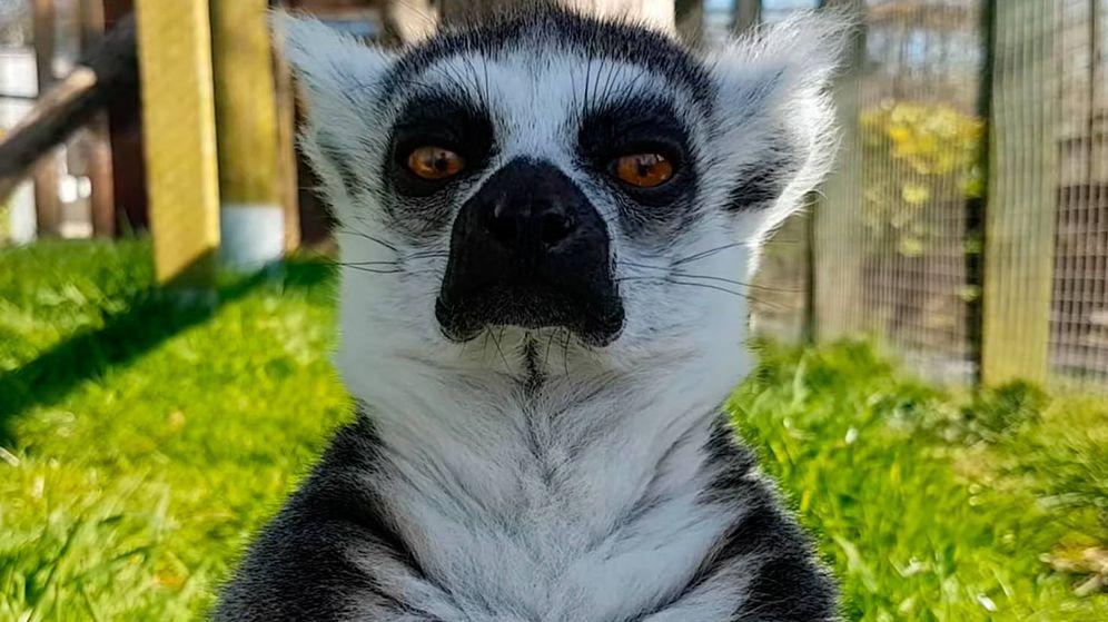 Foto: Uno de los animales del Borth Wild Animal Kingdom que está en peligro (Foto: YouTube)