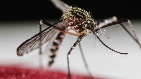 Panamá, en alerta por la propagación del virus del zika entre los indígenas