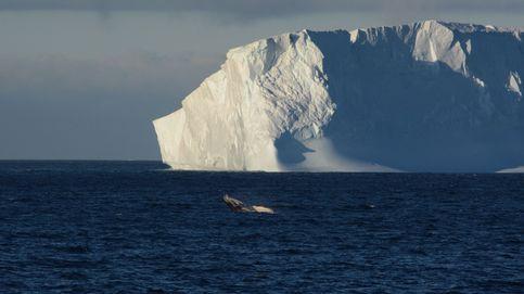Un iceberg se desprende de la Antártida: es tan grande como Gran Canaria
