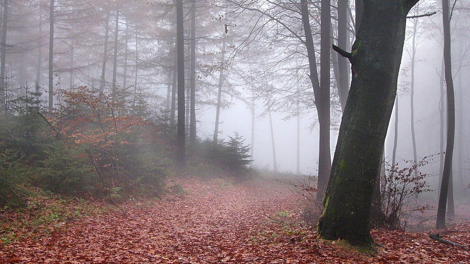 Foto: El bosque de Teutoburgo en un día con niebla. (Nikater)
