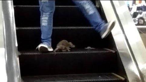 Así bloqueó una rata las escaleras mecánicas de un centro comercial