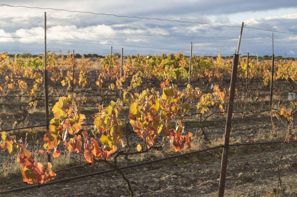 Foto: La falta de lluvia remata las cosechas. Imagen cedida por Sofía Acebes García.
