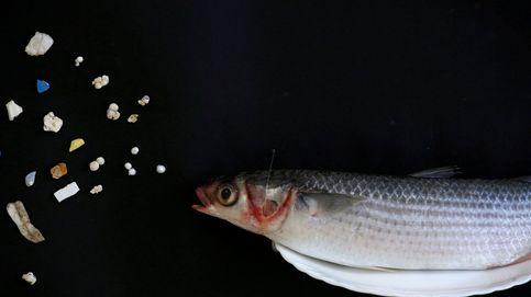 Microplásticos: un caldo de cultivo para bacterias resistentes a antibióticos