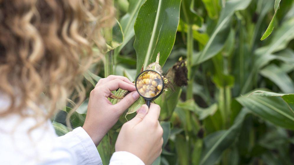 Foto: Inspección de seguridad alimentaria. (iStock)