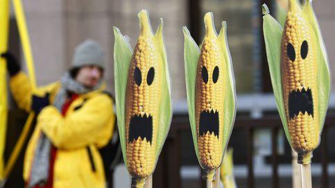Polémica por una bacteria: de pieza clave para el maíz transgénico a provocar diarrea