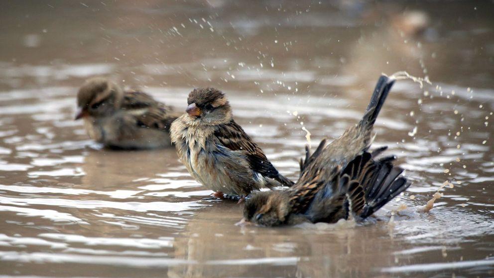 Europa se queda sin aves (y España también)