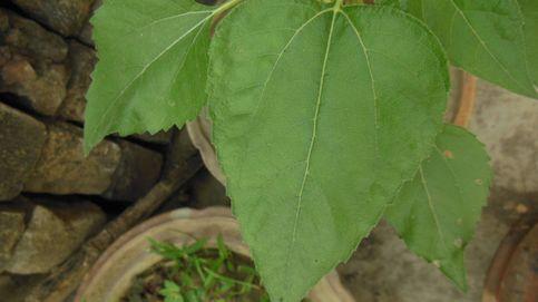 ¿Puedes reconocer estas plantas presentes en España por sus hojas y flores?