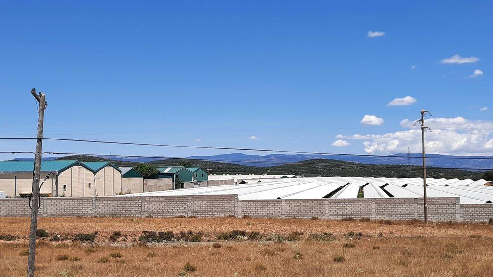 Foto: La granja de visones de Secapiel, en la Puebla de Valverde. (V. R.)