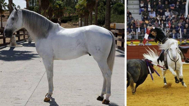 Muere 'Dólar', uno de los caballos de Diego Ventura: Era sencillamente único