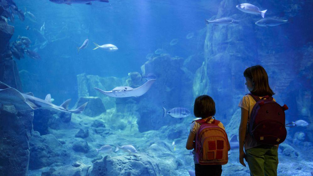 Foto: En verano, también hay una educación informal. (iStock)