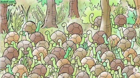 Acertijo viral: ¿eres capaz de encontrar a la serpiente entre las tortugas?
