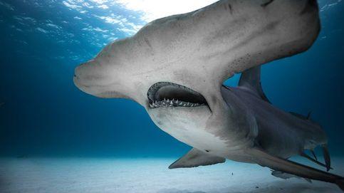 Discovery Channel vuelve a llenarse de tiburones con el contenedor 'Shark Week'
