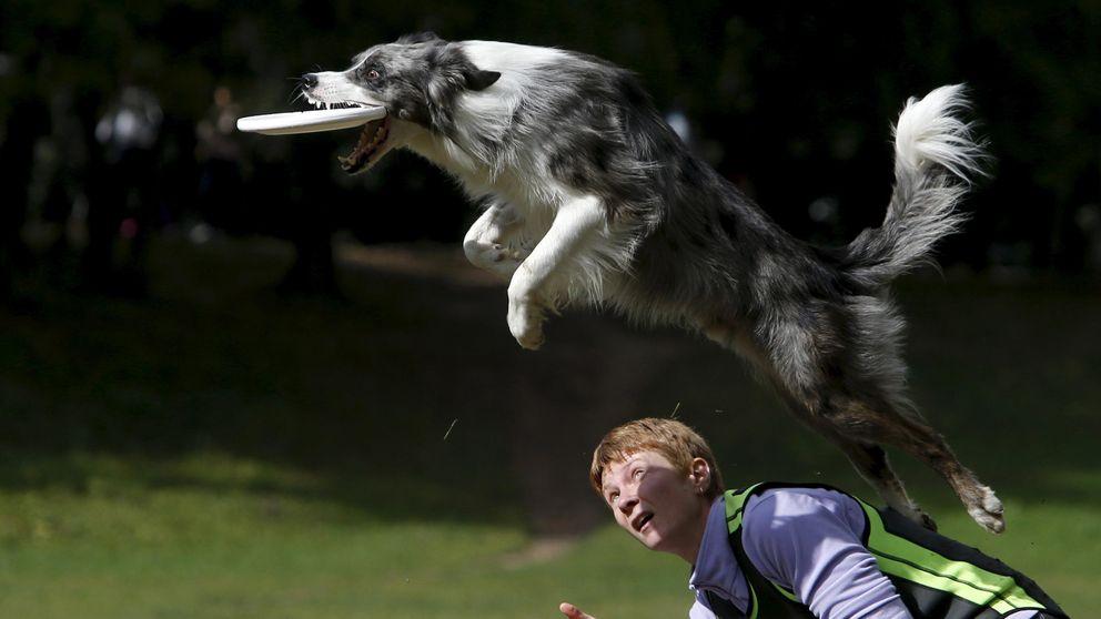 Aunque sea viejo, tu perro todavía puede aprender cosas nuevas