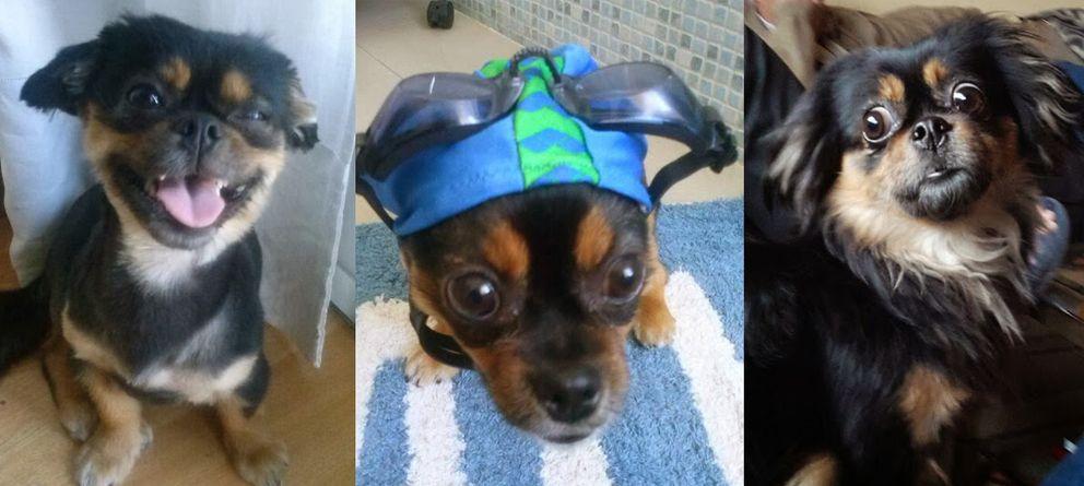 Foto: Nadie con perro puede evitar hacerle fotos y compartirlas con el mundo.