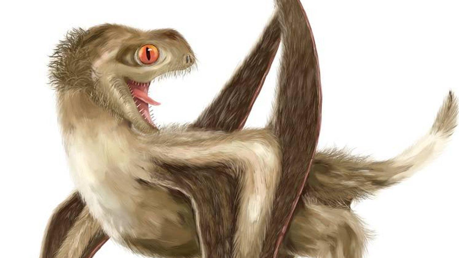 Queda Algun Dinosaurio Que No Tenga Plumas Este Polluelo Se Une A La Lista Juega a dinosaurios listos ahora. dinosaurio que no tenga plumas