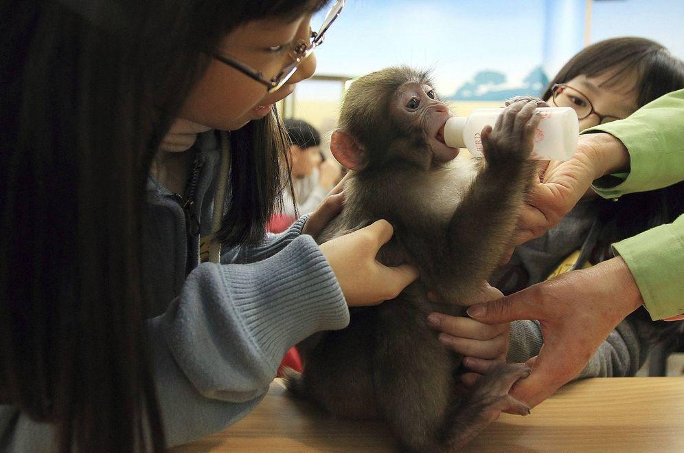 Foto: Niños con un mono japonés en el zoo de Seúl. (EFE)