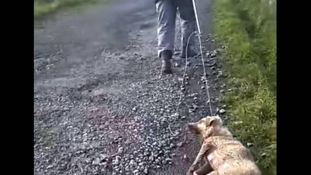 Muere Alma, la perra a la que su dueño a la que su dueño apaleó en Lugo