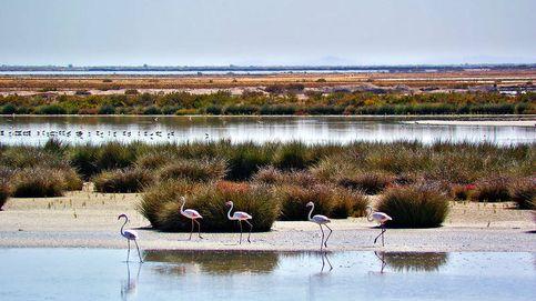 El amenazado paisaje sonoro de las viejas pajareras de Doñana