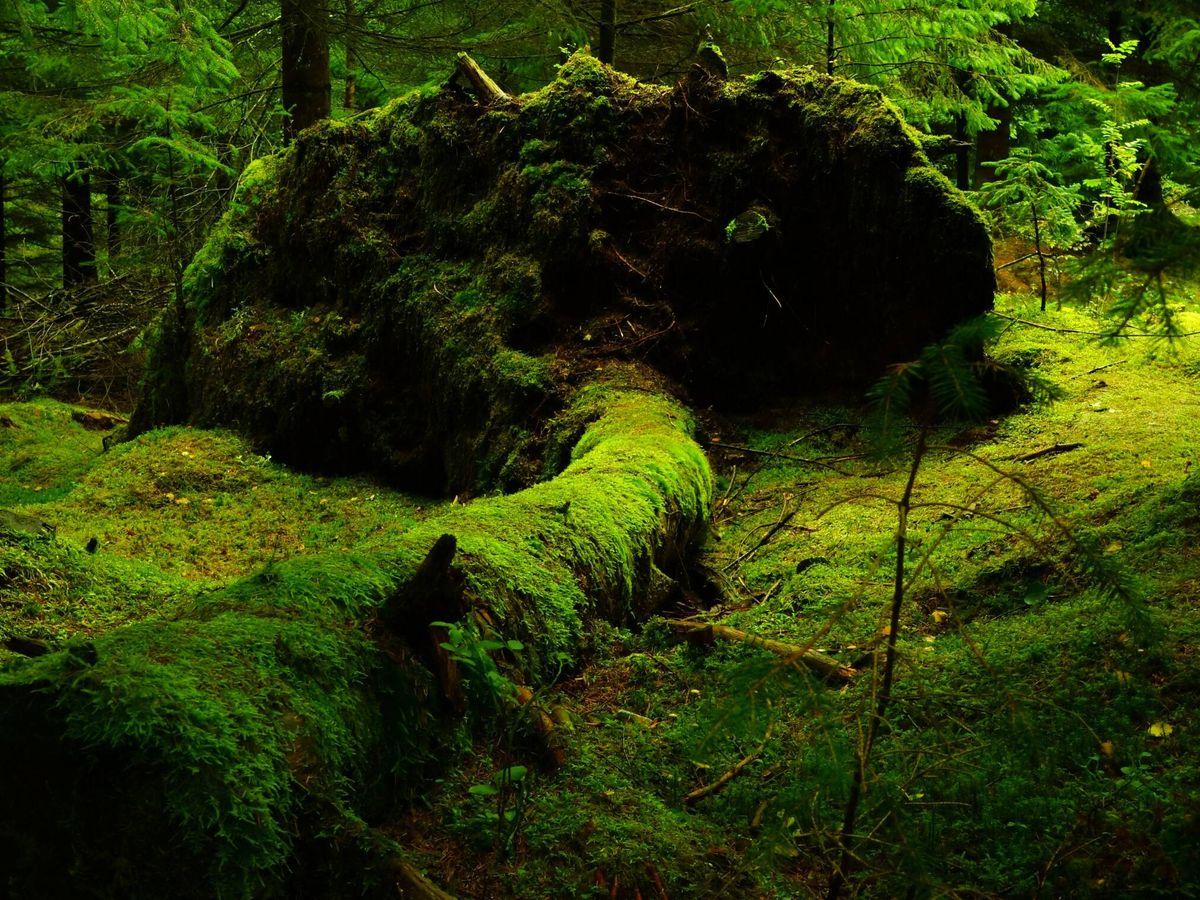 Foto: La aparición de las plantas hace 400 millones de años cambió el clima (Pexels)