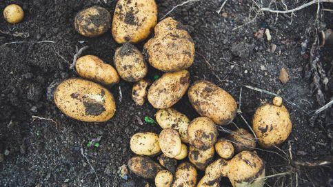 Las patatas no son las malas de la película