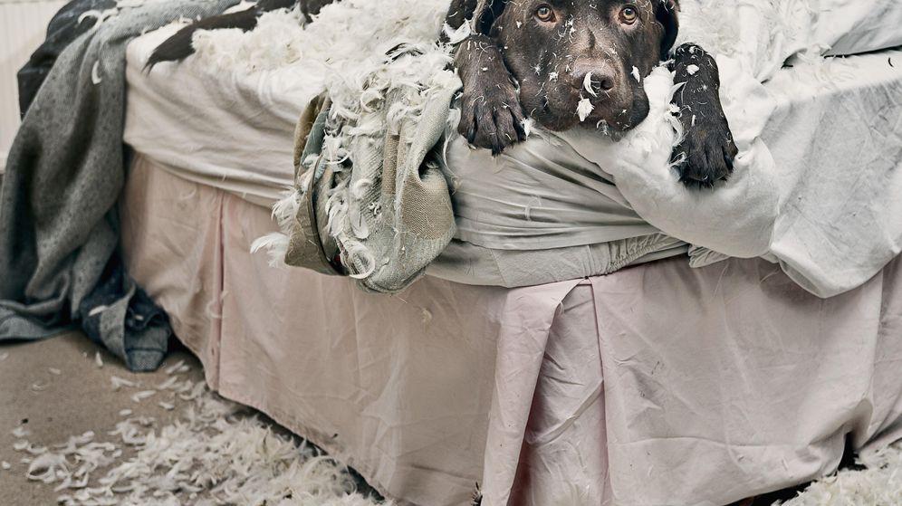 Foto: Dormir con nuestra mascota es beneficioso para ambos... si no la lían de noche (Foto: Corbis)