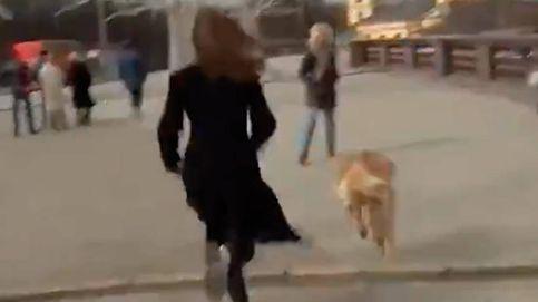 Un perro roba el micrófono a una periodista en directo, pero terminan la conexión juntos