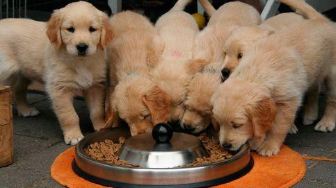 Comederos automáticos para perros y gatos con los que cuidar de tus mascotas