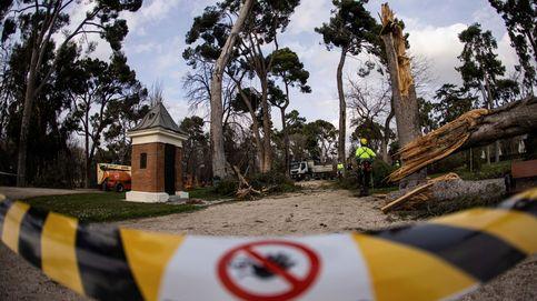 El Retiro abrirá varias zonas el 22 de febrero tras 40 días cerrado por la borrasca Filomena