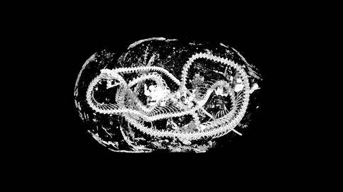 Ya es posible realizar una autopsia a animales momificados hace 2.000 años